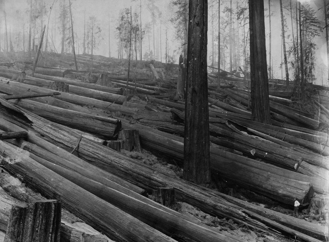 Big River History Logging And Mills 1900 1950