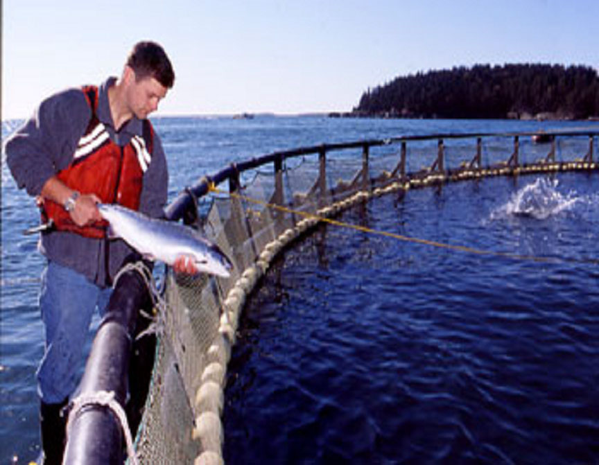 Aquaculture in maine for Fish farms near me